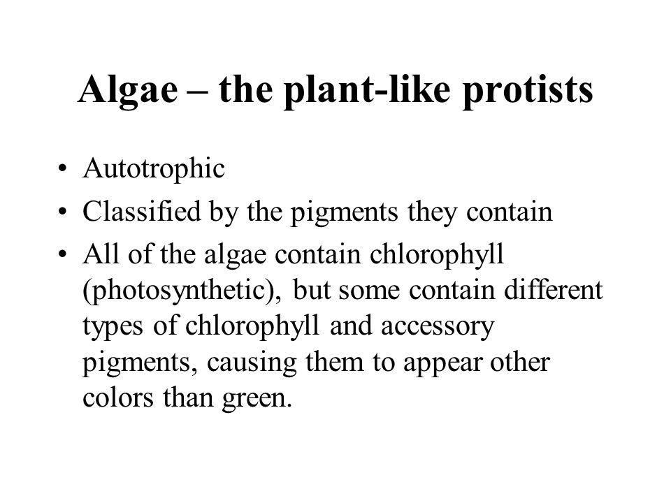Algae – the plant-like protists