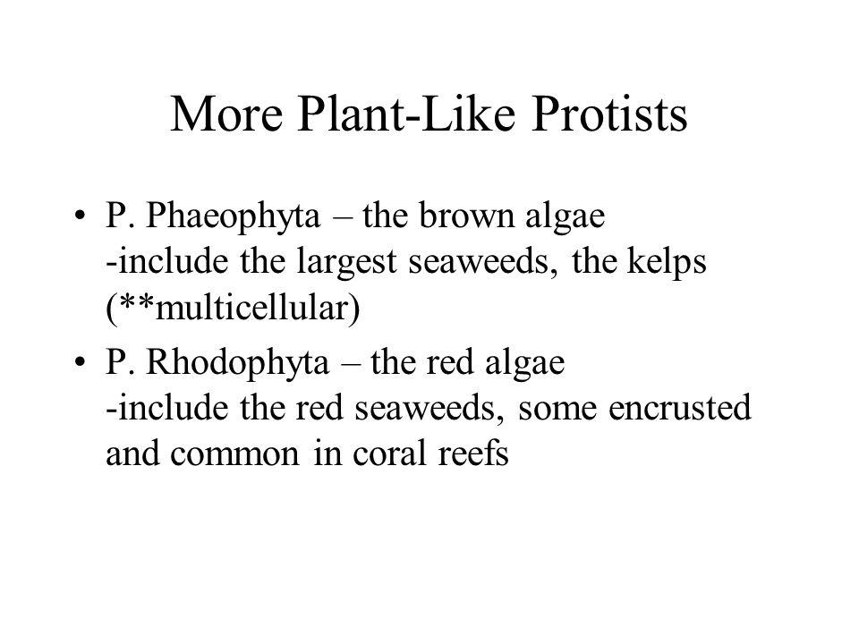 More Plant-Like Protists