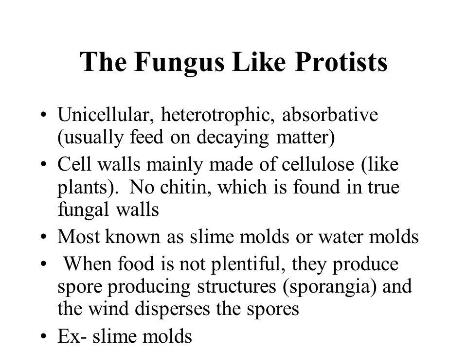 The Fungus Like Protists