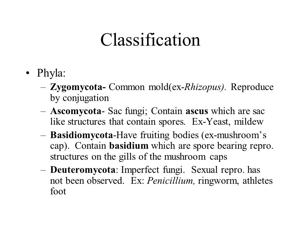 Classification Phyla: