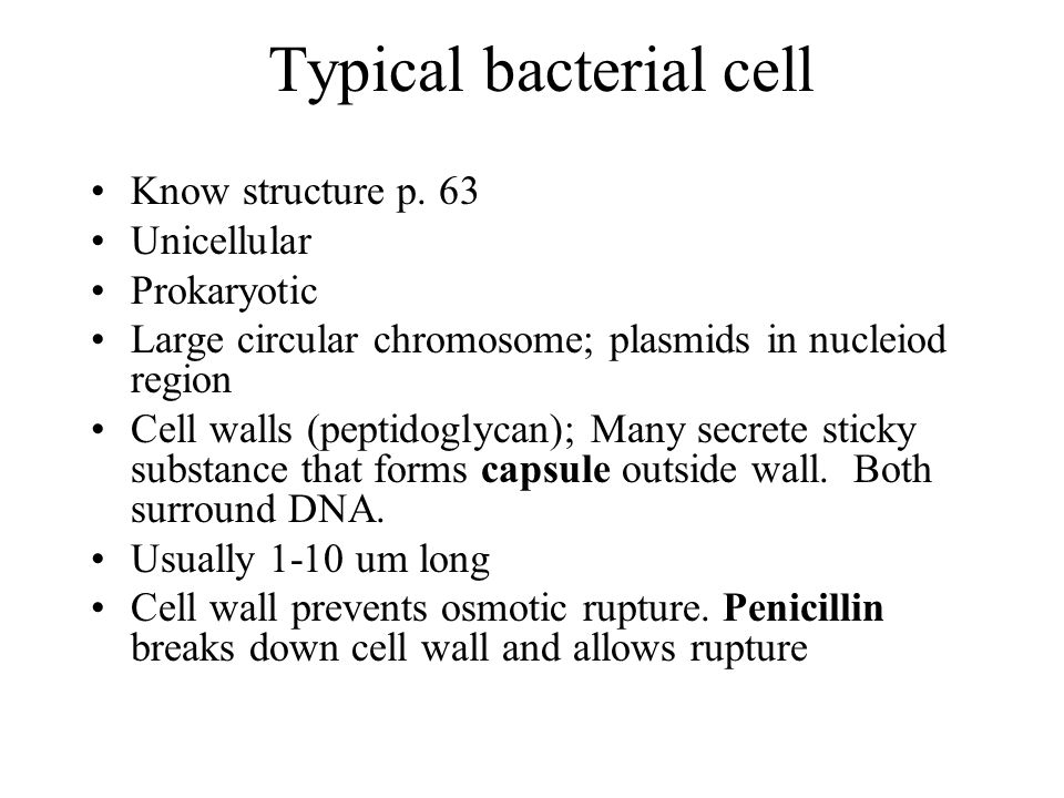 Typical bacterial cell
