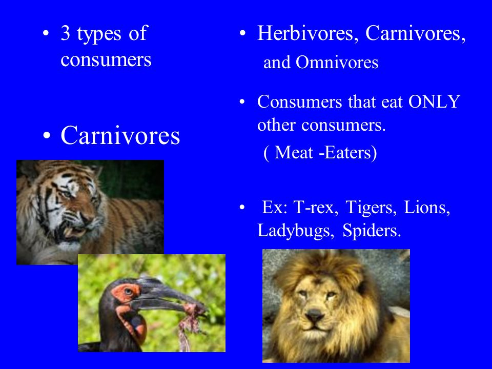 Carnivores 3 types of consumers Herbivores, Carnivores, and Omnivores