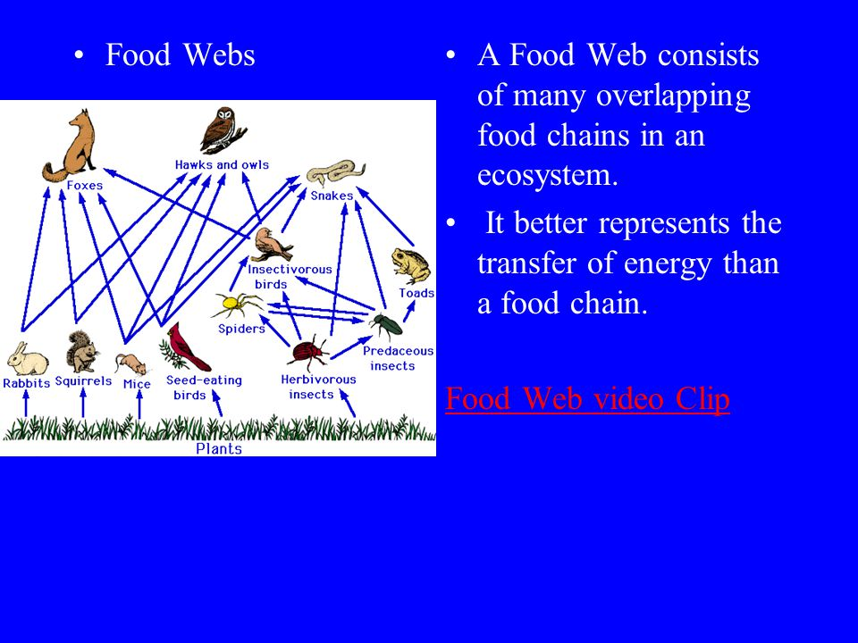 Food Webs A Food Web consists of many overlapping food chains in an ecosystem. It better represents the transfer of energy than a food chain.
