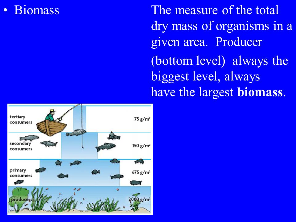 Biomass. The measure of the total. dry mass of organisms in a
