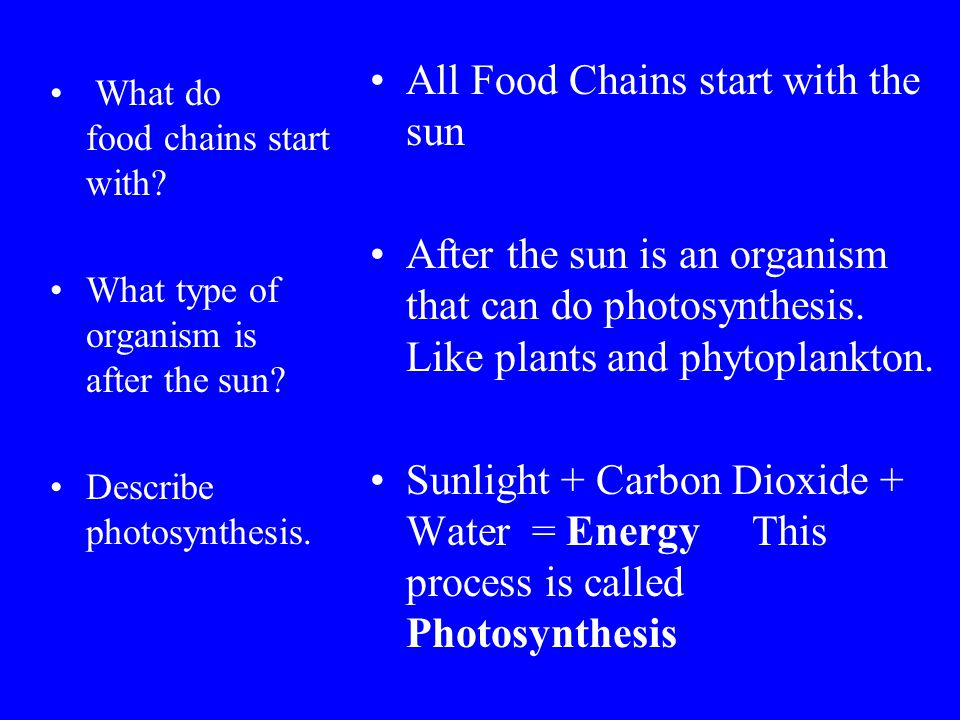 All Food Chains start with the sun