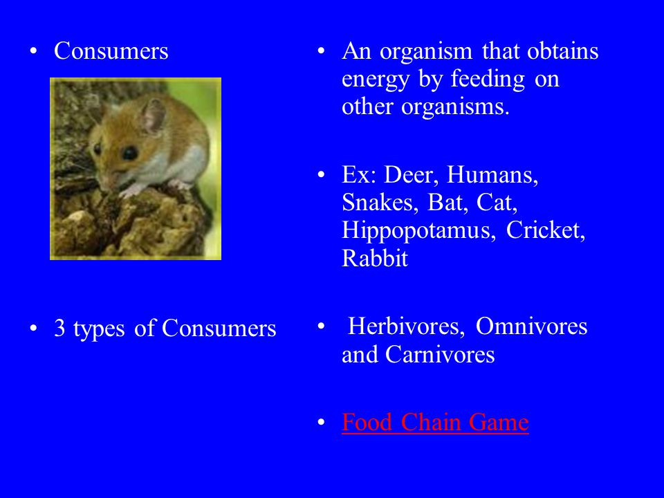 Consumers 3 types of Consumers. An organism that obtains energy by feeding on other organisms.