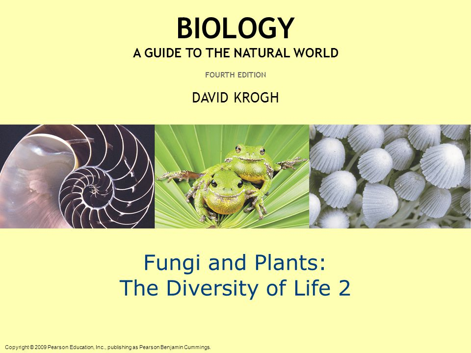 diversity of life fungi Were first isolated from plants or fungi our bread is made from the seeds of grass plants, and we put yeast chapter 1 the diversity of life 1 (a) (b) (c.