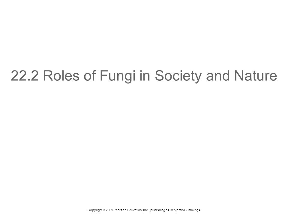 22.2 Roles of Fungi in Society and Nature
