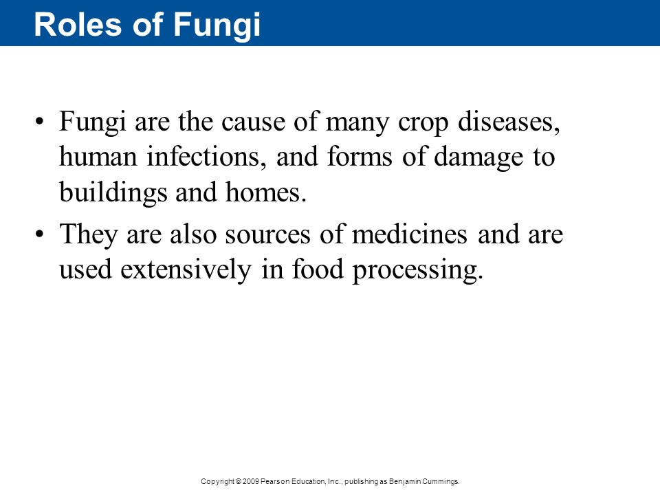 Roles of Fungi Fungi are the cause of many crop diseases, human infections, and forms of damage to buildings and homes.