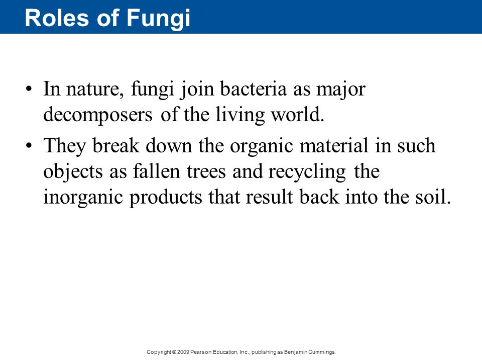 Roles of Fungi In nature, fungi join bacteria as major decomposers of the living world.