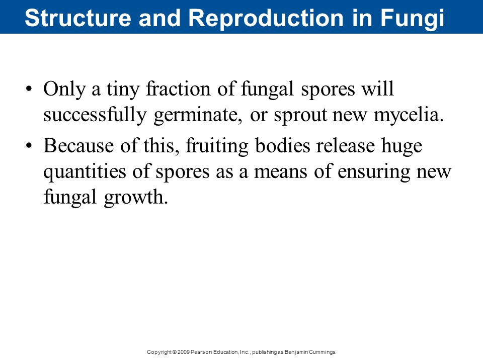 Structure and Reproduction in Fungi