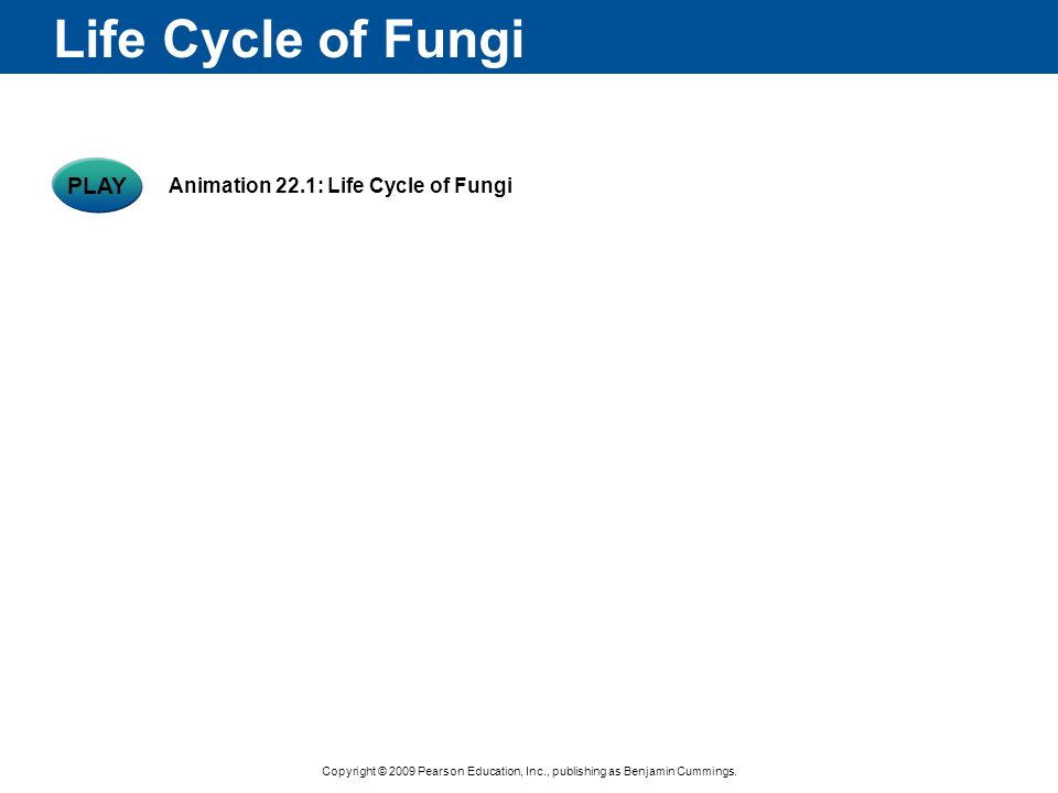 Life Cycle of Fungi PLAY Animation 22.1: Life Cycle of Fungi