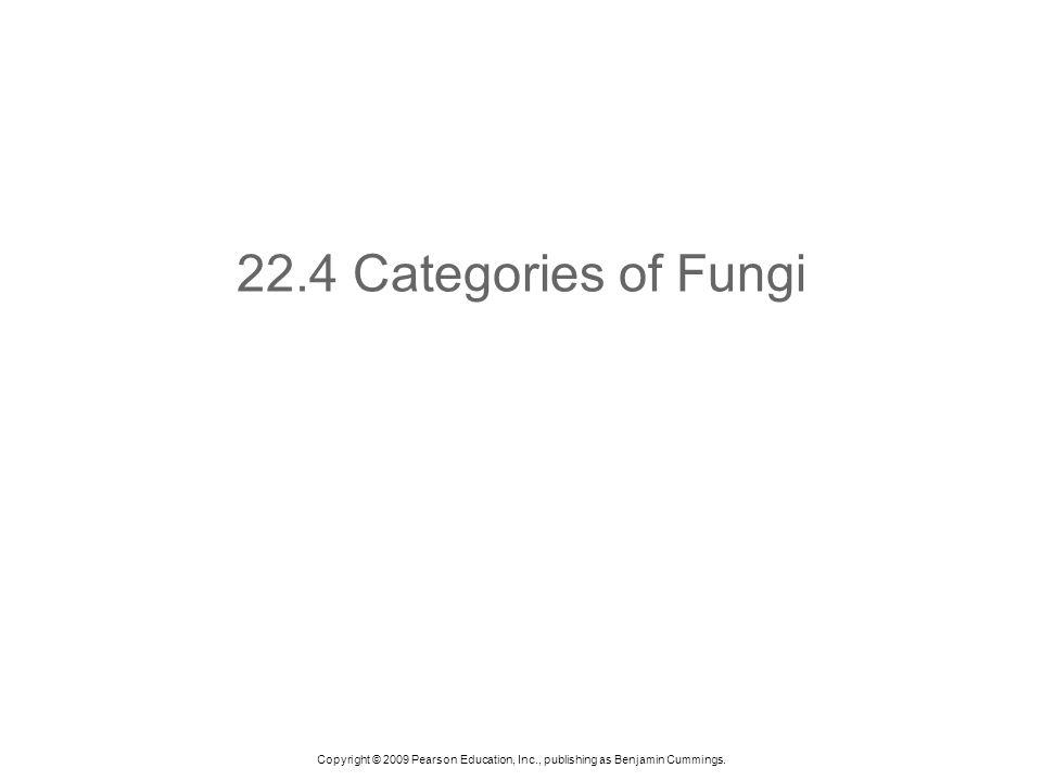22.4 Categories of Fungi