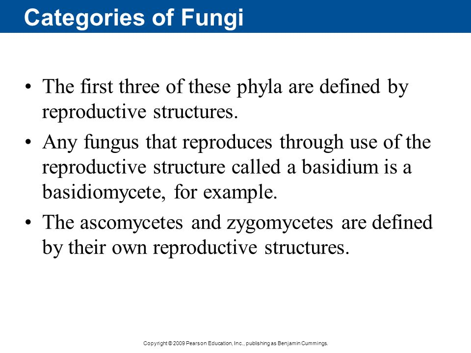 Categories of Fungi The first three of these phyla are defined by reproductive structures.