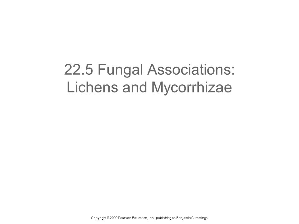 22.5 Fungal Associations: Lichens and Mycorrhizae