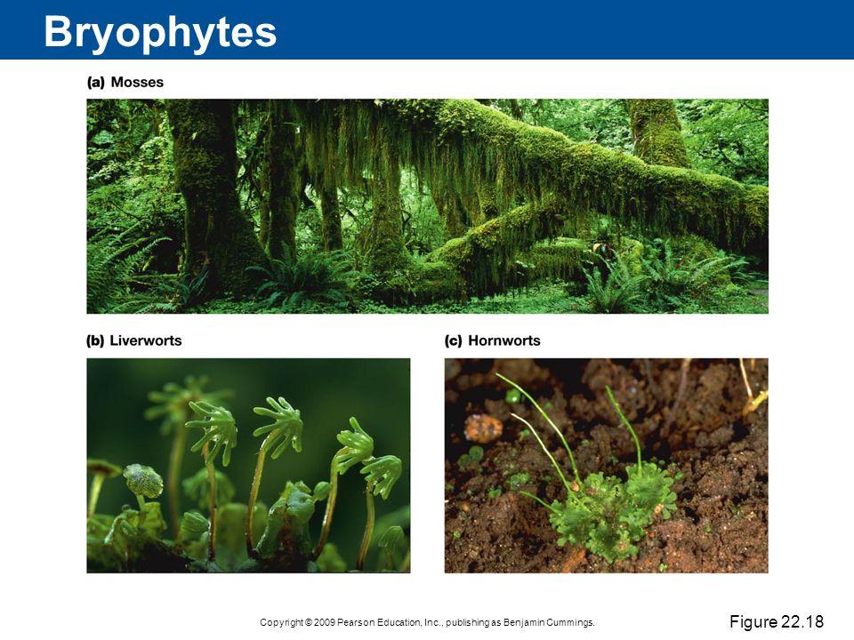 Bryophytes Figure 22.18