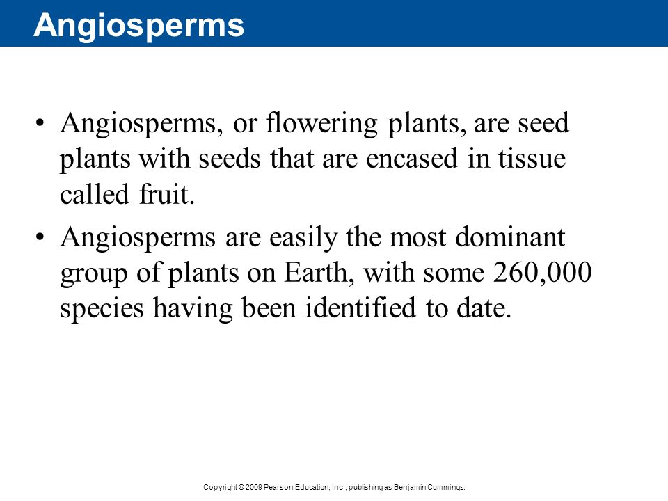 Angiosperms Angiosperms, or flowering plants, are seed plants with seeds that are encased in tissue called fruit.