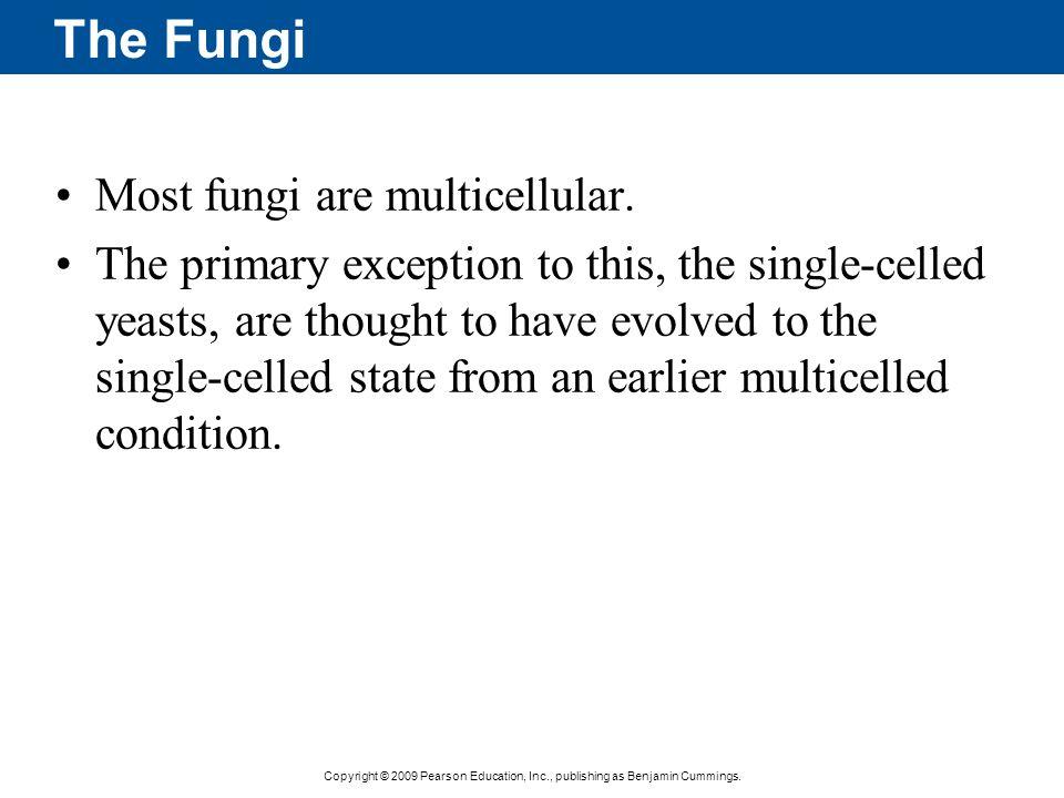 The Fungi Most fungi are multicellular.