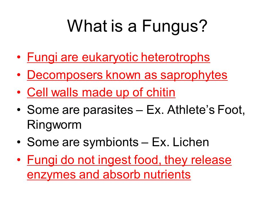 What is a Fungus Fungi are eukaryotic heterotrophs