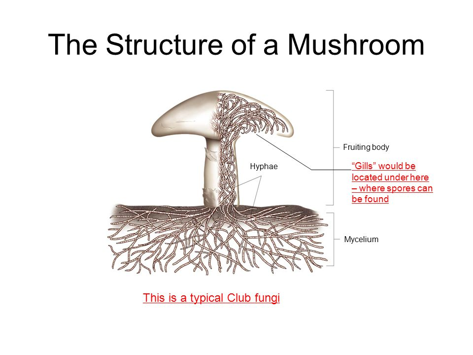 The Structure of a Mushroom