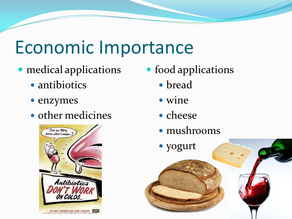 Economic Importance medical applications food applications antibiotics