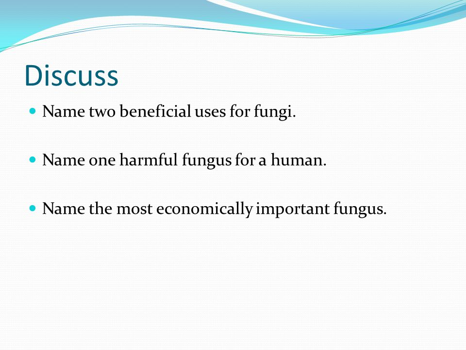 Discuss Name two beneficial uses for fungi.