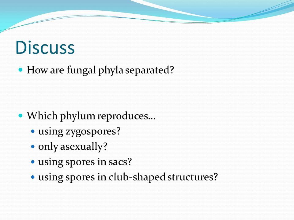 Discuss How are fungal phyla separated Which phylum reproduces…
