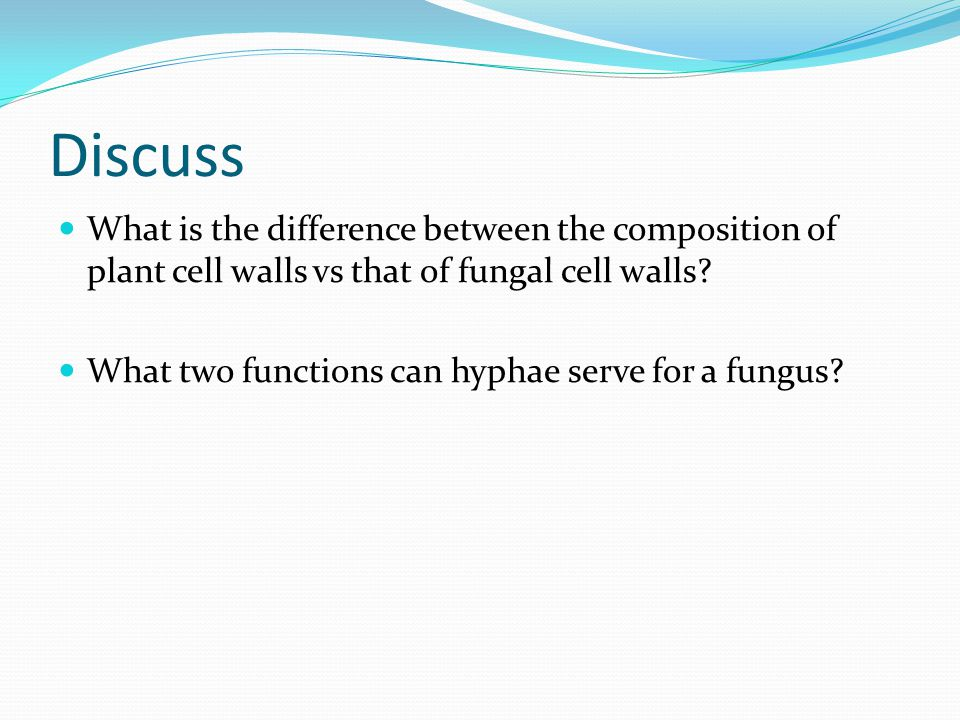 Discuss What is the difference between the composition of plant cell walls vs that of fungal cell walls
