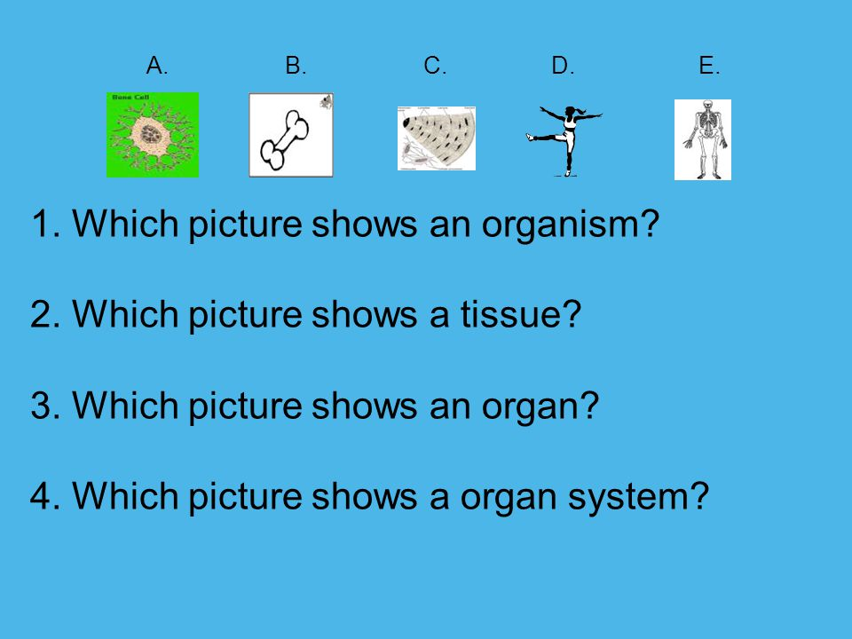 A. B. C. D. E. 1. Which picture shows an organism. 2