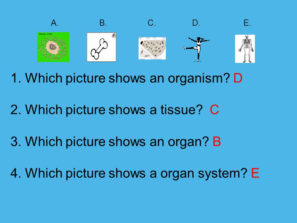 A. B. C. D. E. 1. Which picture shows an organism. D 2