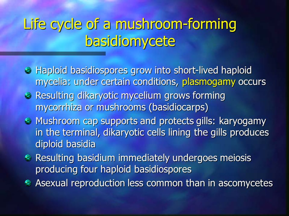 Life cycle of a mushroom-forming basidiomycete