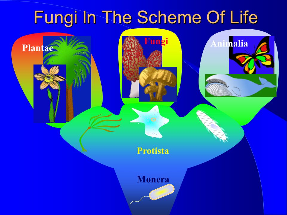 Fungi In The Scheme Of Life