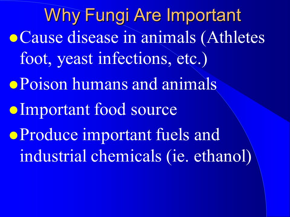 Why Fungi Are Important