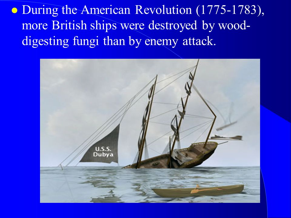 During the American Revolution (1775-1783), more British ships were destroyed by wood-digesting fungi than by enemy attack.