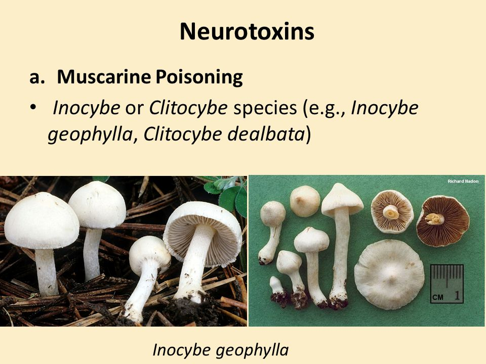 Neurotoxins Muscarine Poisoning