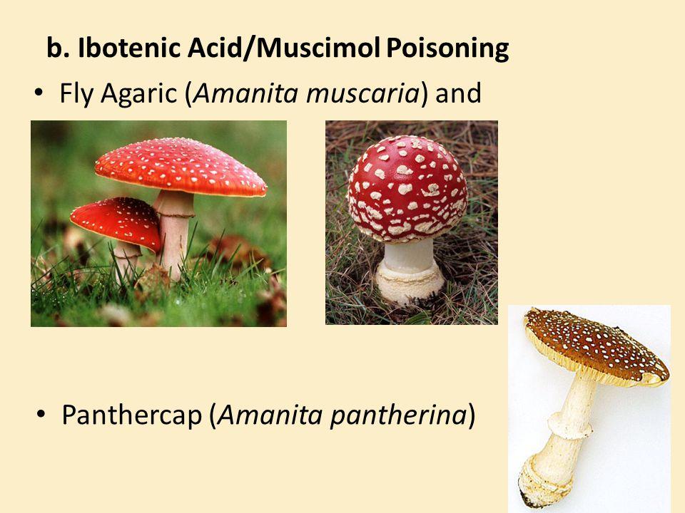 b. Ibotenic Acid/Muscimol Poisoning