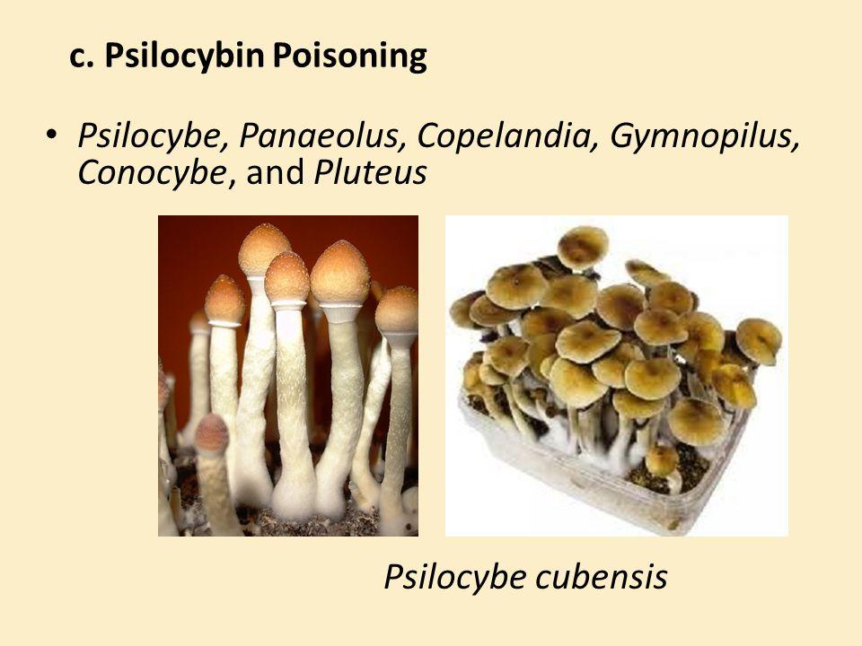 c. Psilocybin Poisoning