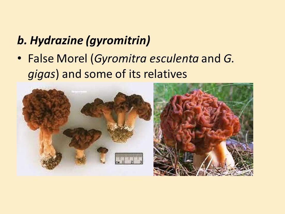 b. Hydrazine (gyromitrin)