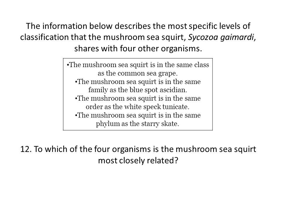 The information below describes the most specific levels of classification that the mushroom sea squirt, Sycozoa gaimardi, shares with four other organisms.