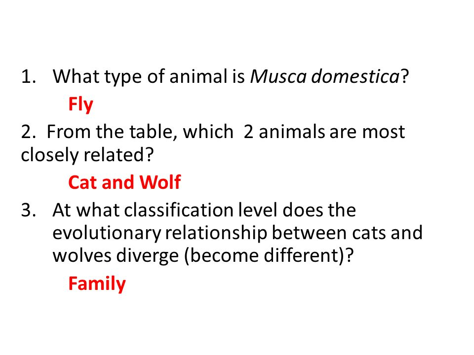 What type of animal is Musca domestica