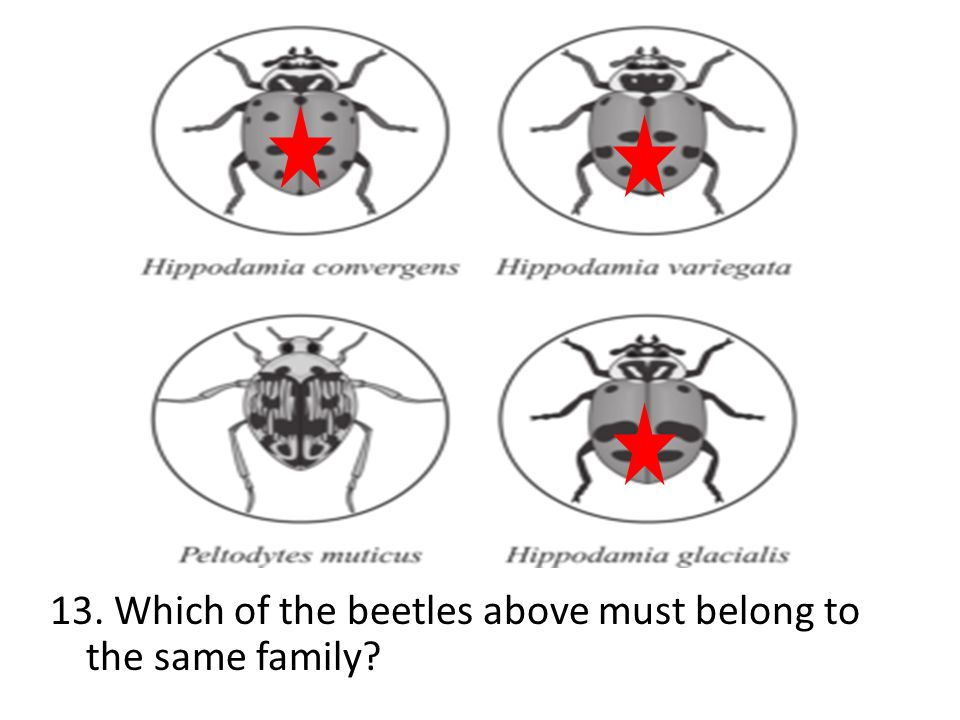 13. Which of the beetles above must belong to the same family