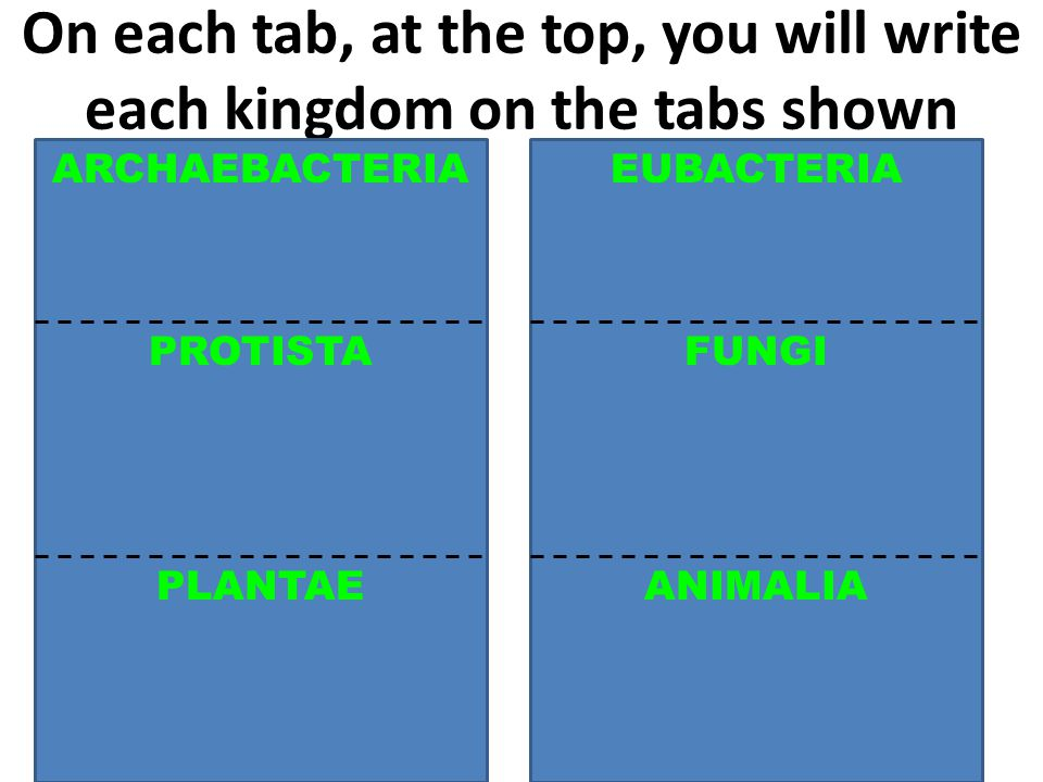 On each tab, at the top, you will write each kingdom on the tabs shown