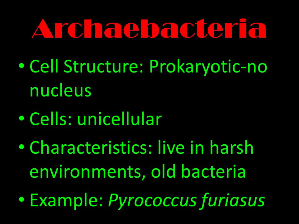 Archaebacteria Cell Structure: Prokaryotic-no nucleus