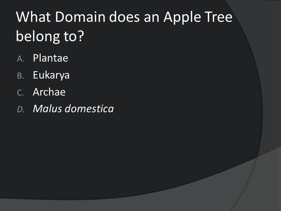 What Domain does an Apple Tree belong to