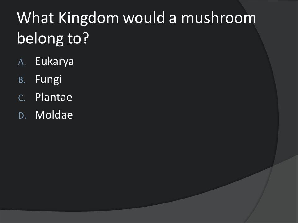 What Kingdom would a mushroom belong to