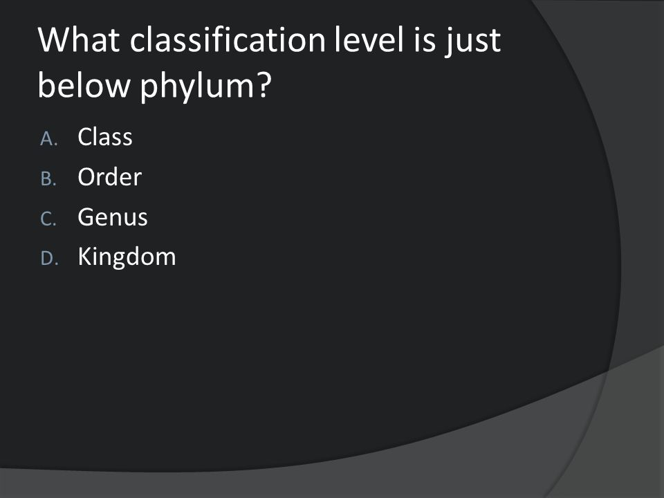 What classification level is just below phylum