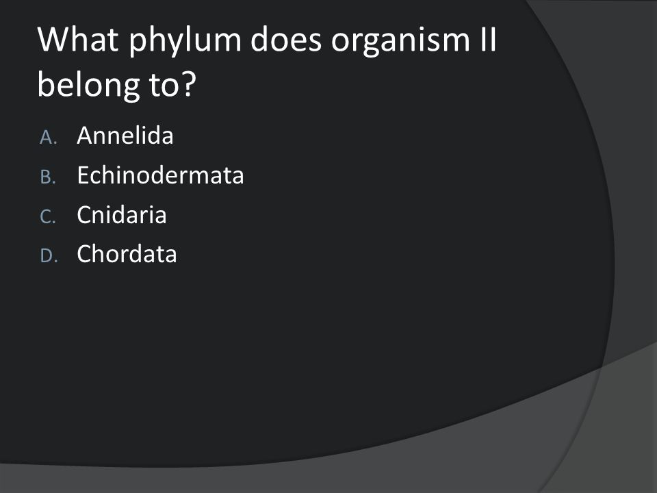 What phylum does organism II belong to