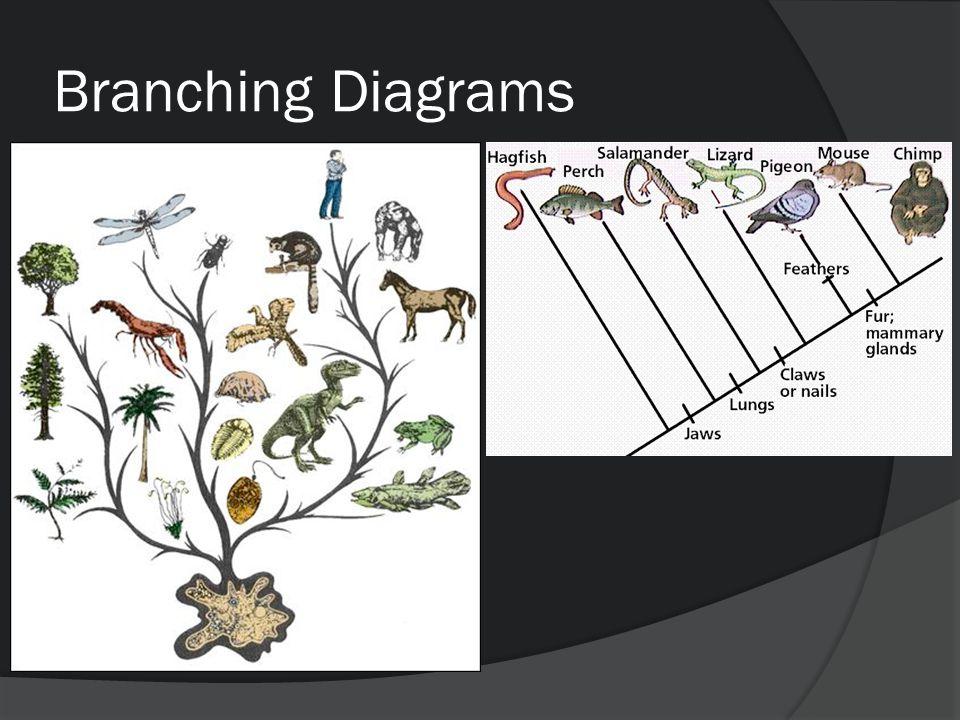 Branching Diagrams