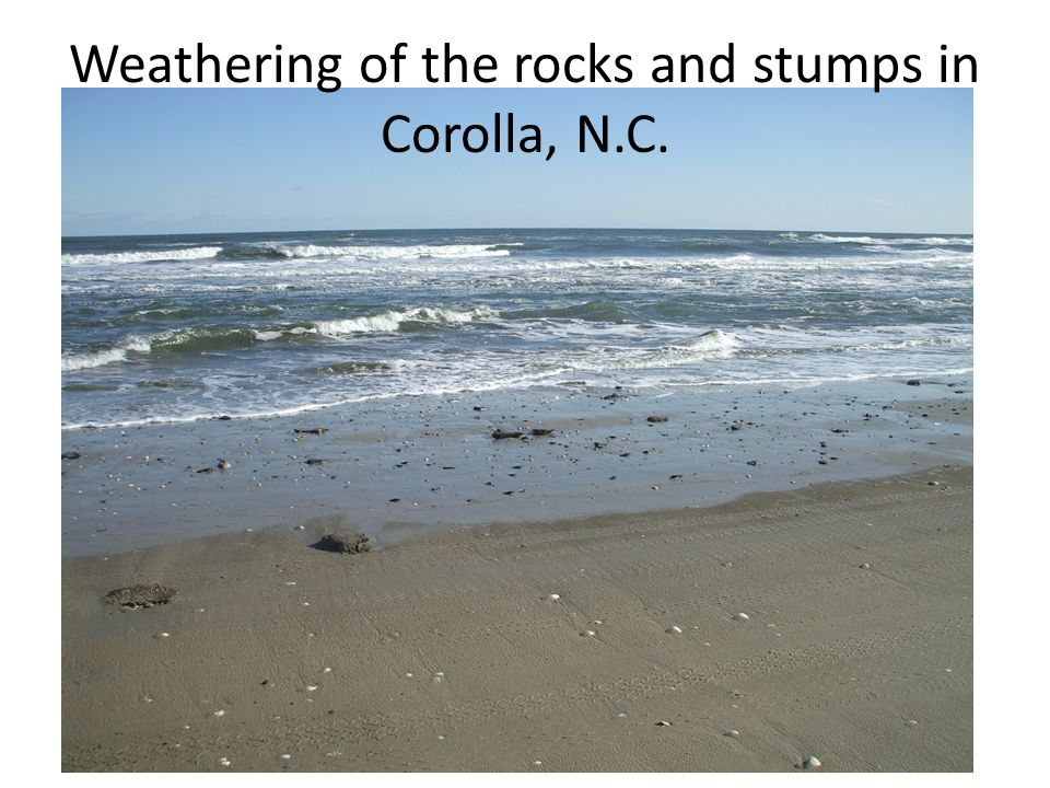 Weathering of the rocks and stumps in Corolla, N.C.
