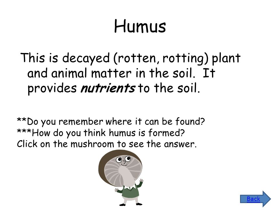 Humus This is decayed (rotten, rotting) plant and animal matter in the soil. It provides nutrients to the soil.